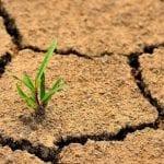 Україна переходить у зону надвисоких температур і погодних катаклізмів: Міндовкілля каже про загрозу опустелювання